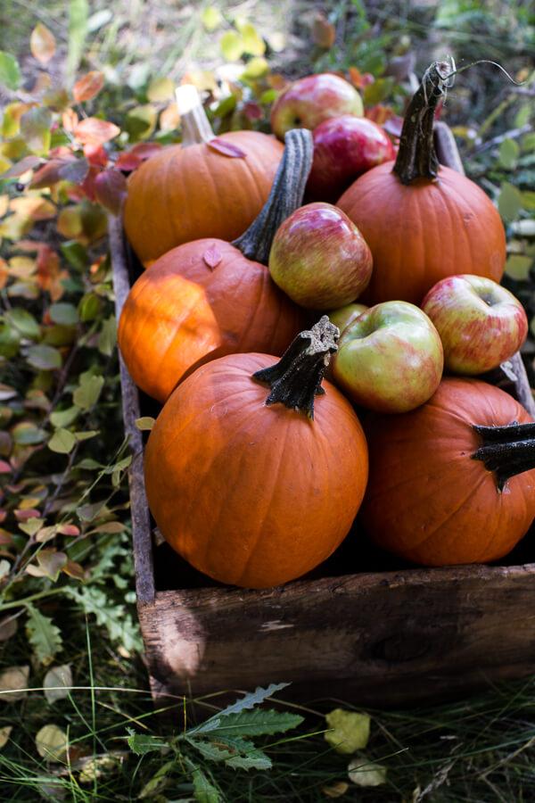 brown-butter-pecan-maple-quinoa-autumn-harvest-granola-61